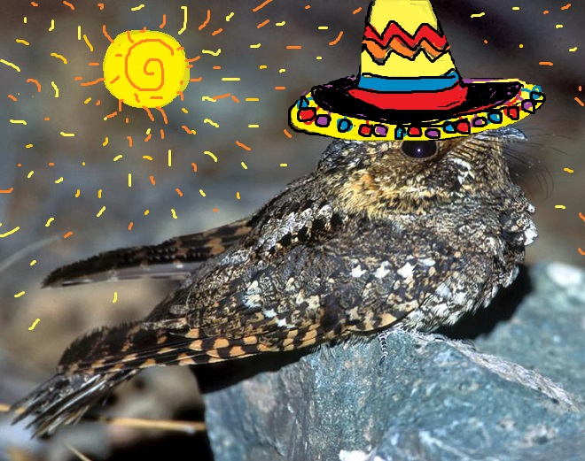 mexican whipoorwill