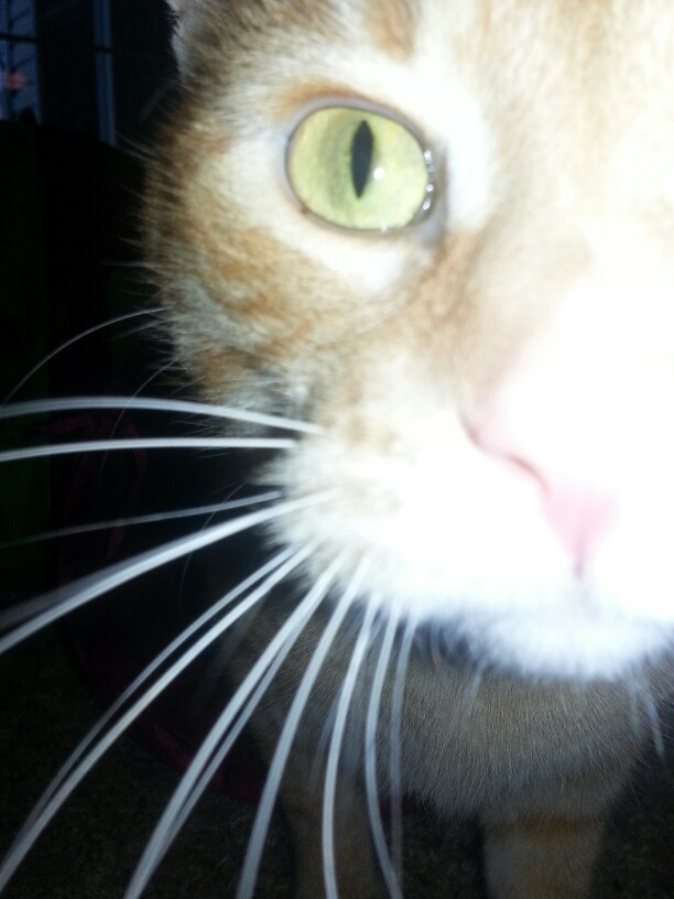 morrie-up-close